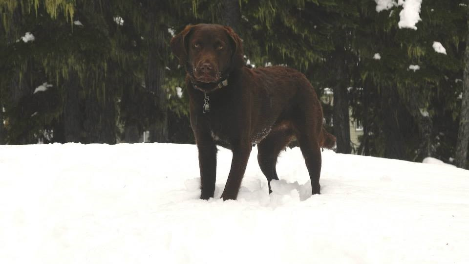 British Columbia Search Dog Association - We will find you ...